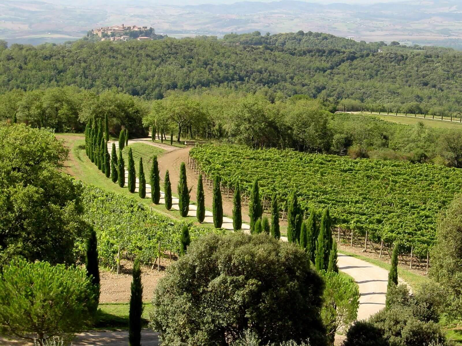 Винный тур в Монталчино (фото)