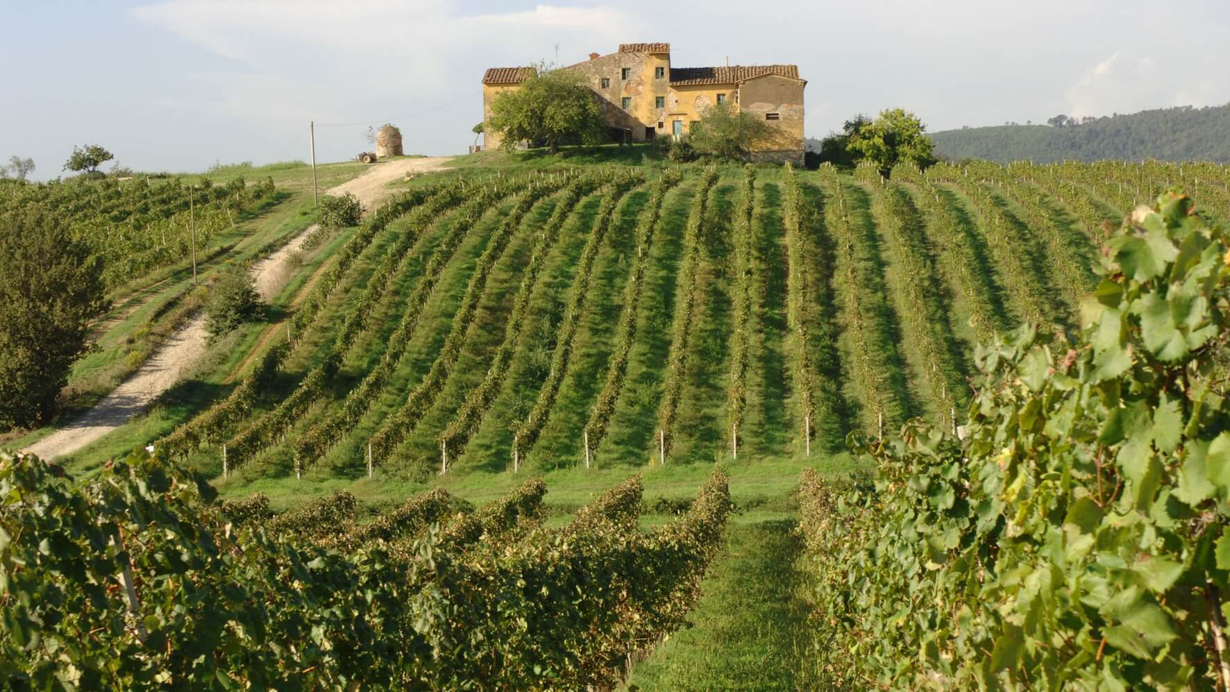 the perfection of tuscan wines due to the best environments of tuscany italy Rich selection of tuscan wines from italian négociant best places to visit in tuscany - italy travel so this is perfection vineyards, tuscany, italy photo.