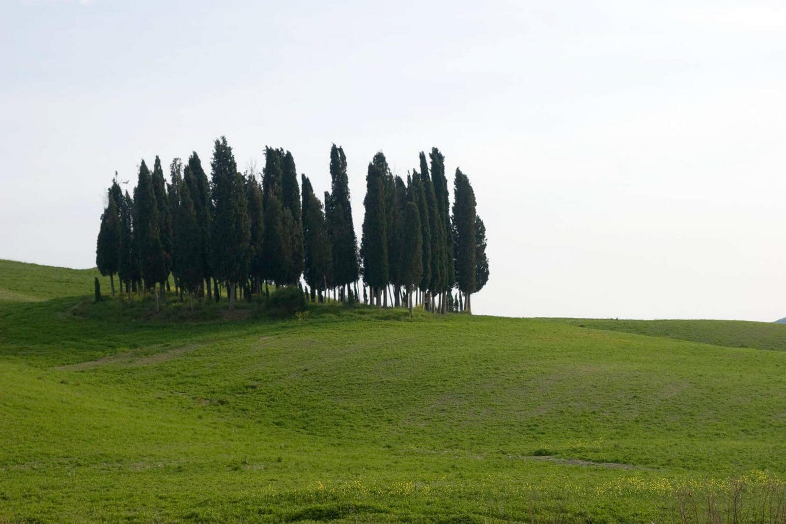 Кьянти или Холмы Флоренции (фото)