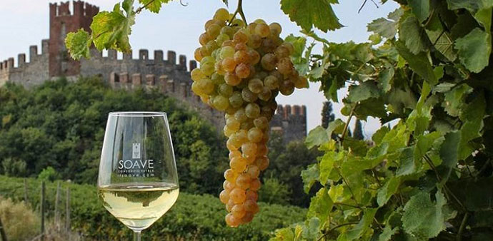Элитное вино Италии (фото Соаве)