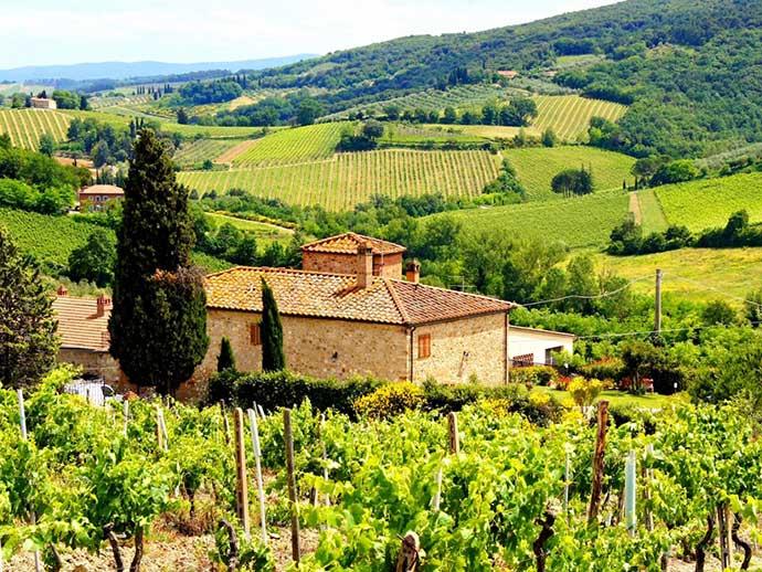 Гастрономический тур (Италия). Фото виноградника