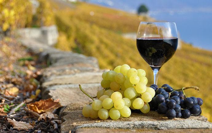 Дегустация вина (Тоскана). Фото вина