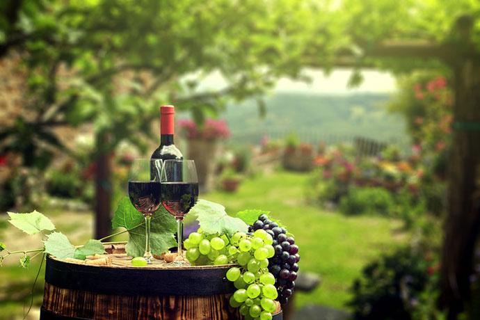 Дегустация вин (Виченца). Фото вина