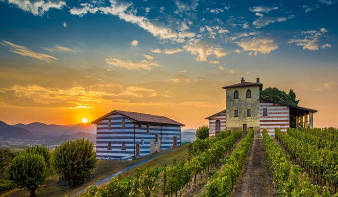 Дегустационные туры (Брешиа). Фото виноградников