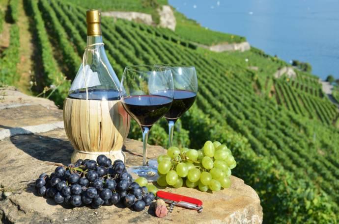 Тосканские вина (фото)
