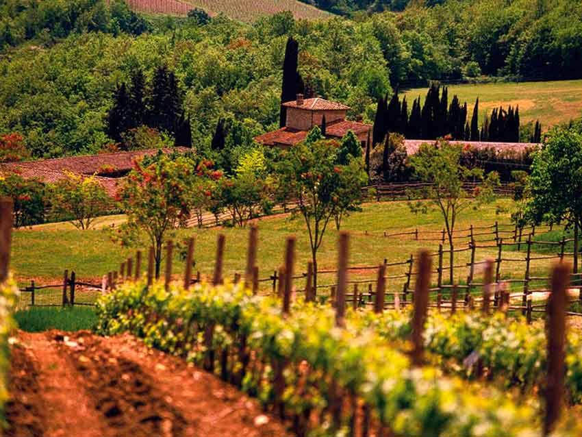 Винодельни Италии (фото)