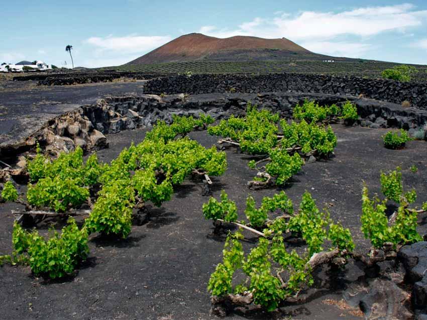 Вулканические вина (фото)